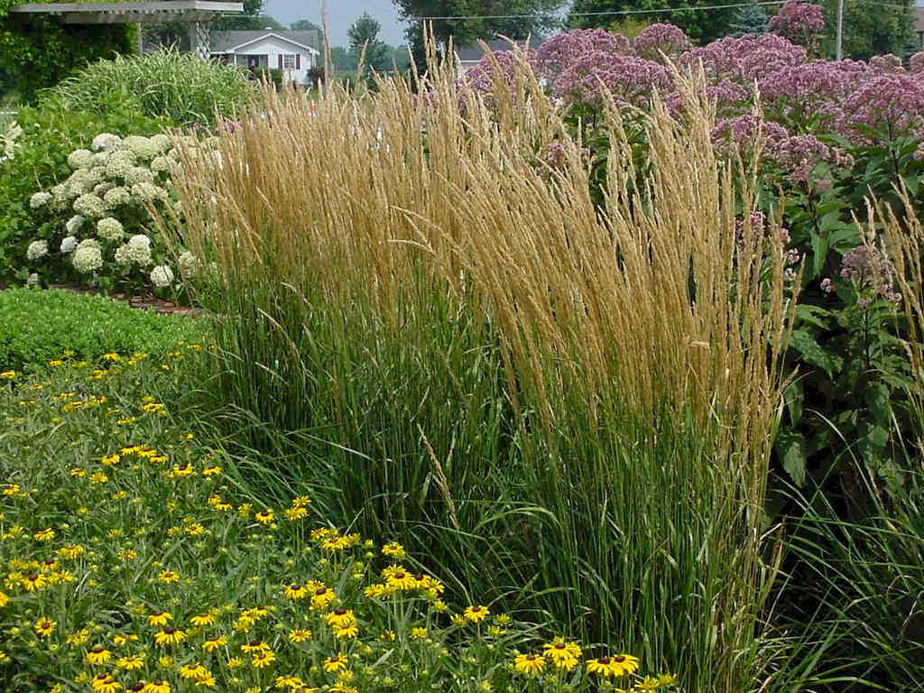 W w greenhouses ppa perennial of the year for Border grasses for landscaping